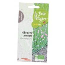 Ciboulette commune 0,5g - Allium schoenoprasum L.